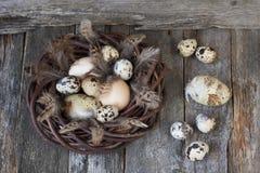 Huevos de Pascua en tablón de madera Imagen de archivo