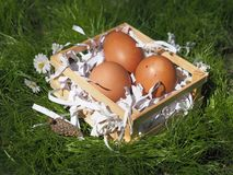 Huevos de Pascua en una cesta en la hierba imágenes de archivo libres de regalías