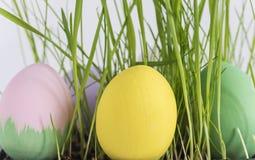 Huevos de Pascua en una hierba Imagen de archivo
