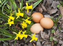 Huevos de Pascua llanos reales con las flores en jardín Foto de archivo