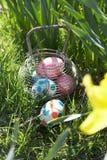 Huevos de Pascua ocultados para la caza en campo del narciso Imágenes de archivo libres de regalías
