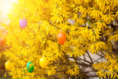 Huevos de Pascua que cuelgan en arbusto Imagen de archivo