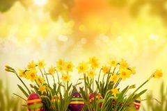 Huevos de Pascua que ocultan en la hierba con el narciso Foto de archivo