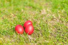 Huevos de Pascua rojos en hierba verde Fotos de archivo