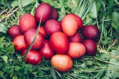 Huevos de Pascua rojos en la hierba con las flores y los blowballs, primavera Fotos de archivo libres de regalías