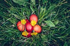 Huevos de Pascua rojos en la hierba con las flores y los blowballs, primavera Foto de archivo libre de regalías