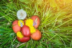 Huevos de Pascua rojos en la hierba con las flores y los blowballs, primavera Foto de archivo