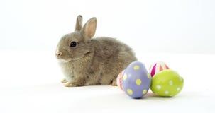 Huevos de Pascua y conejito de pascua almacen de metraje de vídeo