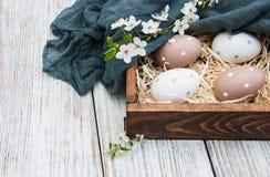 Huevos de Pascua y flor de la primavera Fotografía de archivo libre de regalías