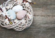 Huevos de Pascua y flor de la primavera Fotografía de archivo