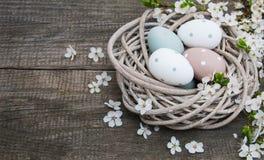Huevos de Pascua y flor de la primavera Imagenes de archivo