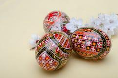 Huevos de Pascua y flores de la cereza del ciruelo Fotografía de archivo
