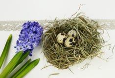 Huevos de Pascua y flores del jacinto en el fondo blanco Imagenes de archivo