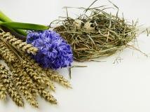 Huevos de Pascua y flores del jacinto en el fondo blanco Imágenes de archivo libres de regalías
