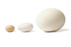 Huevos de Thre alineados Imágenes de archivo libres de regalías