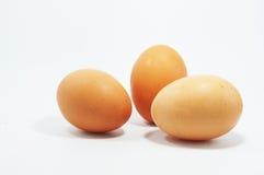 Huevos del árbol Imágenes de archivo libres de regalías