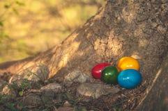 Huevos del comedor en manos Imagen de archivo
