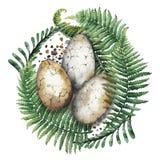 Huevos del dinasaur de la acuarela Fotos de archivo libres de regalías