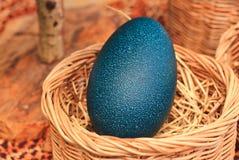 Huevos del emú Fotos de archivo libres de regalías