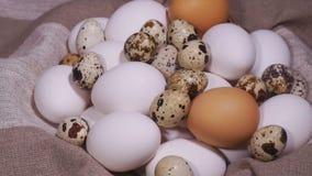 Huevos del pájaro almacen de video