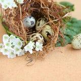 Huevos del pájaro en jerarquía. Foto de archivo