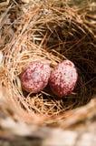Huevos del pájaro en una jerarquía Imagen de archivo