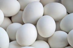 Huevos del pato Imagenes de archivo