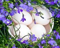Huevos del pato en el tazón de fuente blanco Fotos de archivo libres de regalías