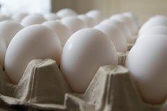 Huevos del pollo Imágenes de archivo libres de regalías