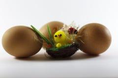 Huevos del pollo alrededor Imágenes de archivo libres de regalías