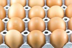Huevos del pollo del color marrón en células de la cartulina fotografía de archivo libre de regalías