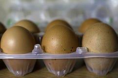 Huevos del pollo en bandeja plástica fotografía de archivo
