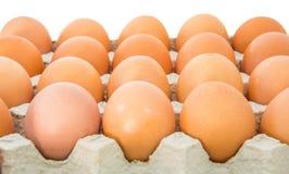 Huevos del pollo en el cartón I del huevo fotografía de archivo libre de regalías