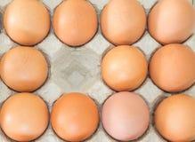 Huevos del pollo en el cartón III del huevo fotografía de archivo libre de regalías