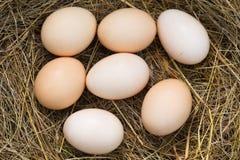 Huevos del pollo en el heno imagen de archivo