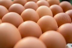 Huevos del pollo en el panel de papel Fotos de archivo libres de regalías