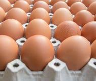 Huevos del pollo en el panel de papel Imágenes de archivo libres de regalías