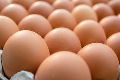 Huevos del pollo en el panel de papel Imagenes de archivo