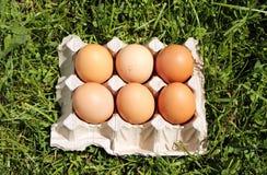 Huevos del pollo en hierba Foto de archivo