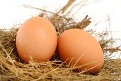 Huevos del pollo en jerarquía Imagen de archivo libre de regalías