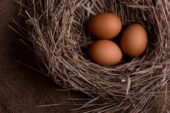 Huevos del pollo en jerarquía en fondo de la arpillera Fotografía de archivo