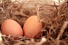 Huevos del pollo en la granja imagen de archivo