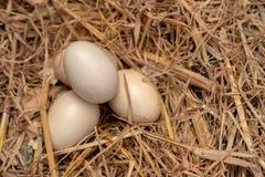 Huevos del pollo en la jerarquía de la paja Imágenes de archivo libres de regalías