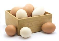 Huevos del pollo en rectángulo Imagen de archivo libre de regalías