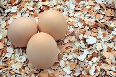 Huevos del pollo entero en cáscaras machacadas Fotos de archivo