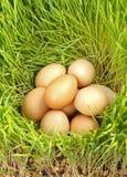 Huevos del pollo entre el trigo verde Fotografía de archivo libre de regalías