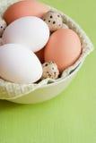 Huevos del pollo y de codornices. Imagen de archivo libre de regalías