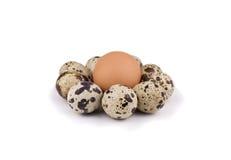 Huevos del pollo y de codornices Foto de archivo libre de regalías