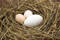 Huevos del pollo y de ganso en una jerarquía del heno Imagen de archivo