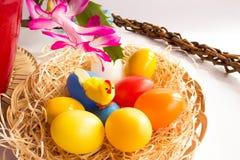 Huevos del pollo y flor coloridos del cactus de pascua Fotos de archivo libres de regalías